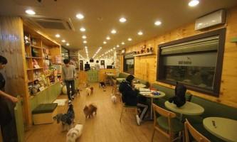 Собаче кафе the bau house в кореї набуває шалену популярність