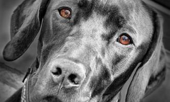 Собачий ніс - засіб діагностики небезпечної хвороби