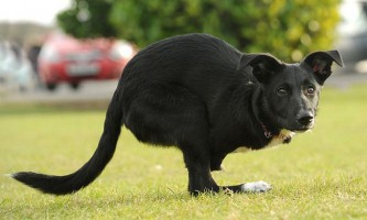 Собачка-кенгуру на прізвисько ру