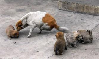 Собака без задніх лап стала мамою чотирьох цуценят
