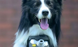 Собака-фотограф робить знімки, коли щось її сильно хвилює