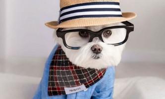 Собака-хіпстера на прізвисько тобіас