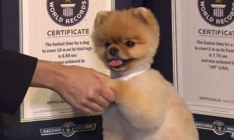Собака з сша встановила світовий рекорд з бігу на двох лапах