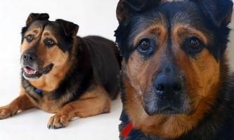 Собака не може знайти господаря, тому що виглядає занадто сумною