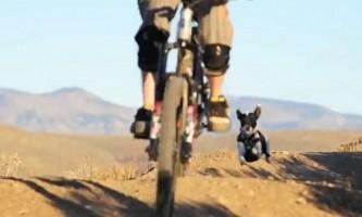 Собака по кличці лили обожнює гори і гонки за велосипедом