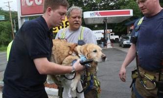 Собака-поводир врятувала господиню ціною власного здоров`я