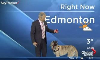 Собака перетворила прогноз погоди в шоу, щоб знайти нових господарів