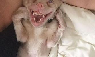 Собака з особливими потребами стала зіркою instagram