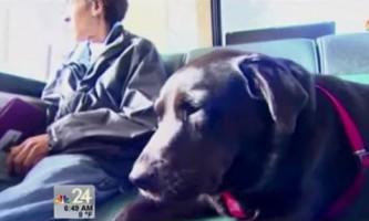 Собака сама їздить в автобусі в парк для вигулу тварин