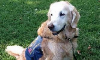 Собака, рятувала людей після теракту 11 вересня, відсвяткувала своє 16-річчя