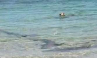 Собака-забіяка покусала акулу