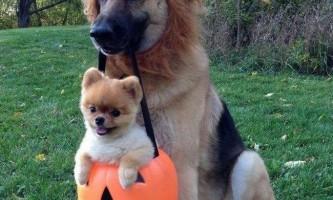 Собаки були одомашнені в азії, а не в європі