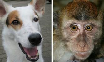 Собаки і примати бачать лінії магнітного поля землі