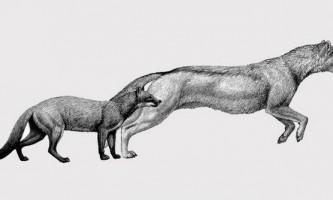 Собаки позбулися котячого вигляду і повадок під впливом клімату