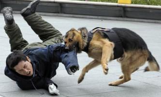 Собаки на роботі