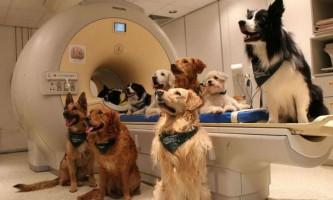 Собаки розуміють сенс сказаних господарем слів