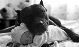 Собаки щасливі поруч з господарем