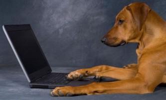 Собаки зможуть самостійно публікувати фотографії в соціальних мережах