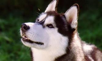 Собаки вміють читати по обличчях