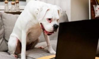 Собаки дізнаються особи своїх господарів, але вважають за краще дивитися на родичів