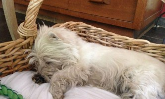 Собаки бачать сни про своїх господарів