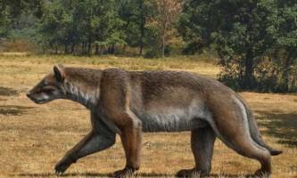 Собакомедведь був найсуворішим хижаком європи