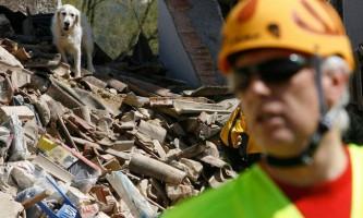 Собаку врятували з-під завалів через дев`ять днів після землетрусу