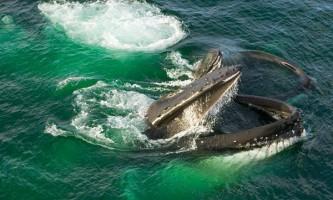Соціальне навчання не для китів?