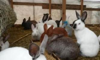 Зміст кроликів у вольєрах