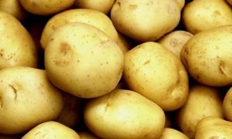 Сорт картоплі «тулеевск»