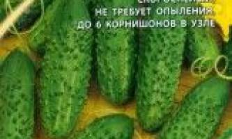 Сорт огірка: еріка f1
