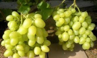 Сорт винограду «аркадія»