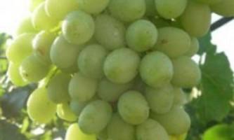 """Сорт винограду """"благовіст"""""""