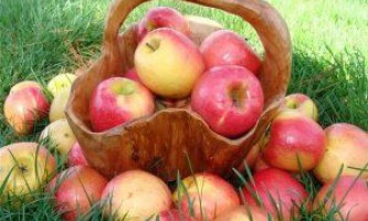 Сорти яблук: літні, осінні, зимові
