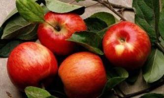Сорти яблук з пізнім дозрівання врожаю