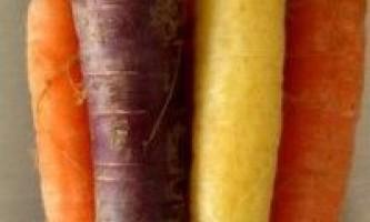 Сорти моркви