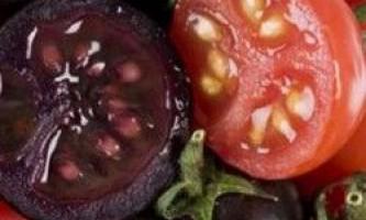 Сорти помідорів