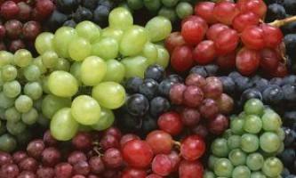 Сорти винограду за алфавітом + фото