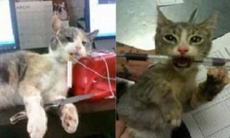 Співробітників притулку для тварин покарають за фото кота з сигаретою