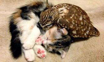 Совенок фуку і кошеня маримо - нерозлучні друзі