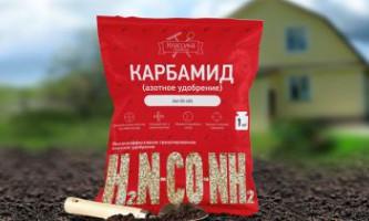 Поради вирощування полуниці від досвідчених садівників