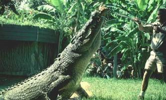 Сучасні види крокодилів
