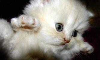 Зовсім маленьке кошеня став причиною великого дтп