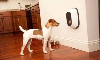 Створено відео-телефон для домашніх тварин