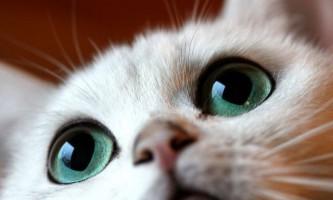 Створена котяча соціальна мережа catmoji