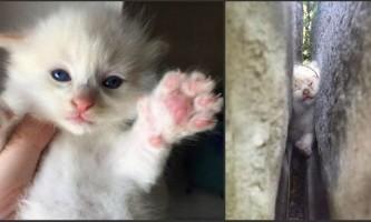 Порятунок двотижневого кошеня