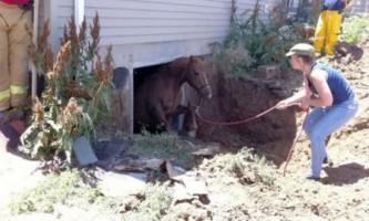 Порятунок коні провалилася в підвал будинку