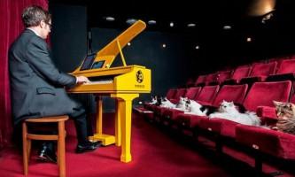 Фахівці створили перший в світі котячий рояль