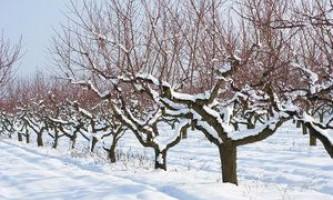 Список робіт по саду і городу, місячний посівний календар на грудень 2017