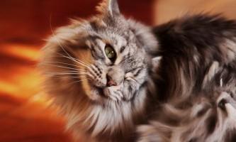 Засіб від позбавляючи у кішок